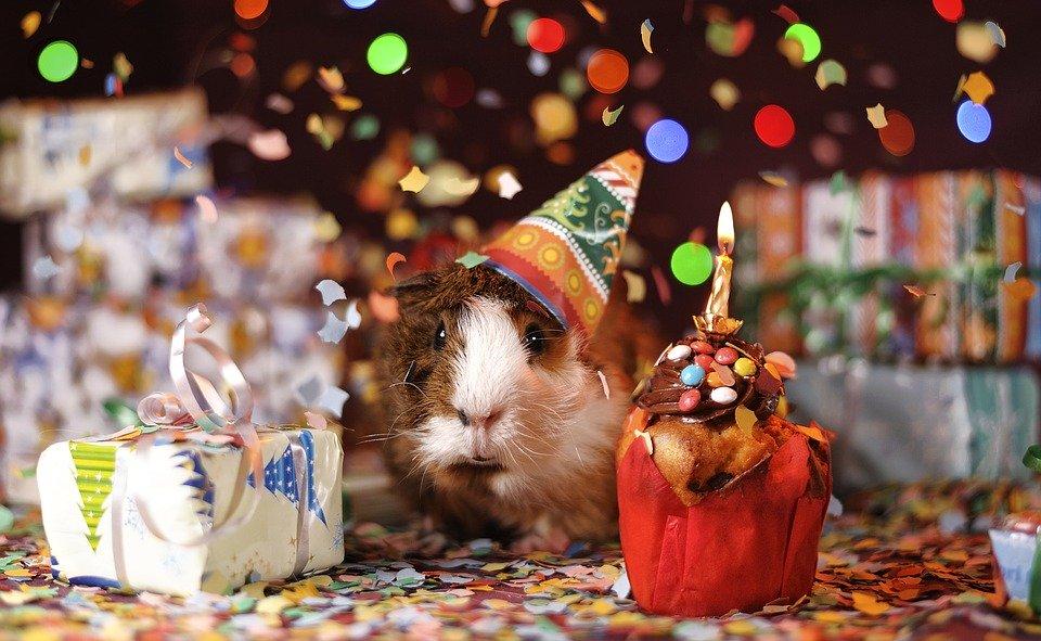 הפקת ימי הולדת למבוגרים